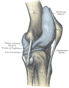 Wikipedia's version of a knee; research assistant to good doctors everywhere. Well, Lorne. And Fitzroy North.