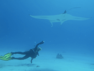 me diving with a manta ray. Worth any risk ...