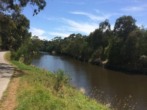 Riding the Yarra on a perfect day.