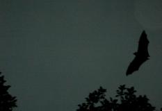 Fly on, my bats.